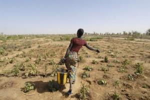 africa, mali, donna contadina
