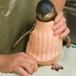 Knit these cute little Penguin Jumpers and you can Win prizes