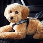 Top Safety Tips for Dogs travelling in cars