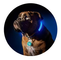 dogcollar2