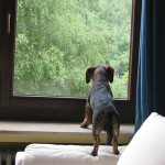 Pets for Apartments: how to keep your dog happy and stimulated when they're alone