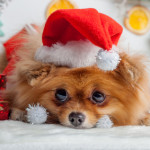 Christmas School Holidays is the perfect time to adopt a pet