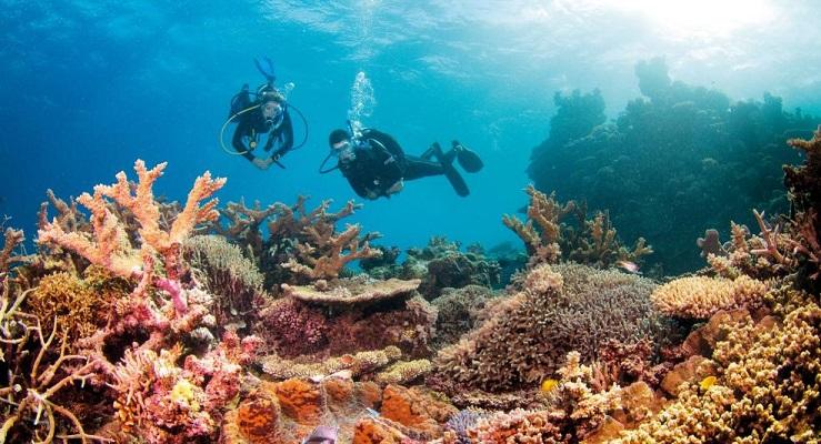 Great Barrier Reef, North Queensland, Australia