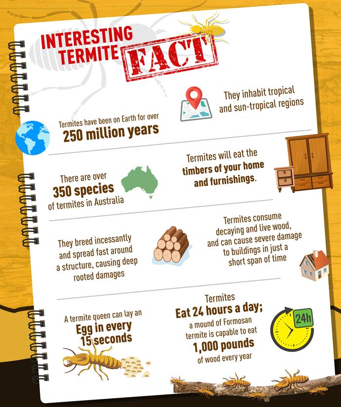 Termite Facts