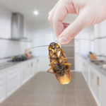 Everything You Should Know About Pest Control – Well, Almost Everything