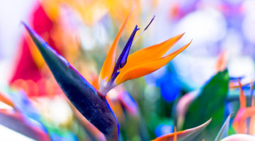Petals From Paradise: All About the Exotic Flowers of Hawaii