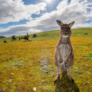 Scenic Wilderness Escape on Kangaroo Island