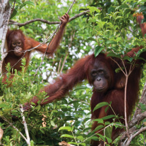Discover Untouched Beauty in the Rainforests of Borneo