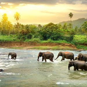 Incredible Sri Lanka Tour – from Wildlife Safaris to Five-Star Hotels
