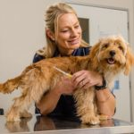Nationwide microchip blitz to keep Aussie pets out of pounds