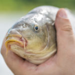 Infographic: Essential Items for Carp Fishing