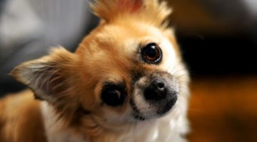 5 Things Dogs Do That Should Totally Be Creepy but Are Actually Cute
