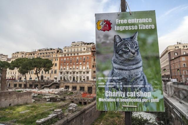 Torre Argentina Cat Sanctuary sign.