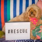 Rescue a Pet on National Pet Adoption Day 9th February 2019