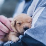 3 Surprising Realities About Raising A Puppy