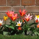 The Best Flowers For Your Garden