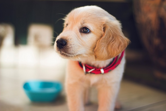 Things to Organise Prior to Bringing a Puppy Home